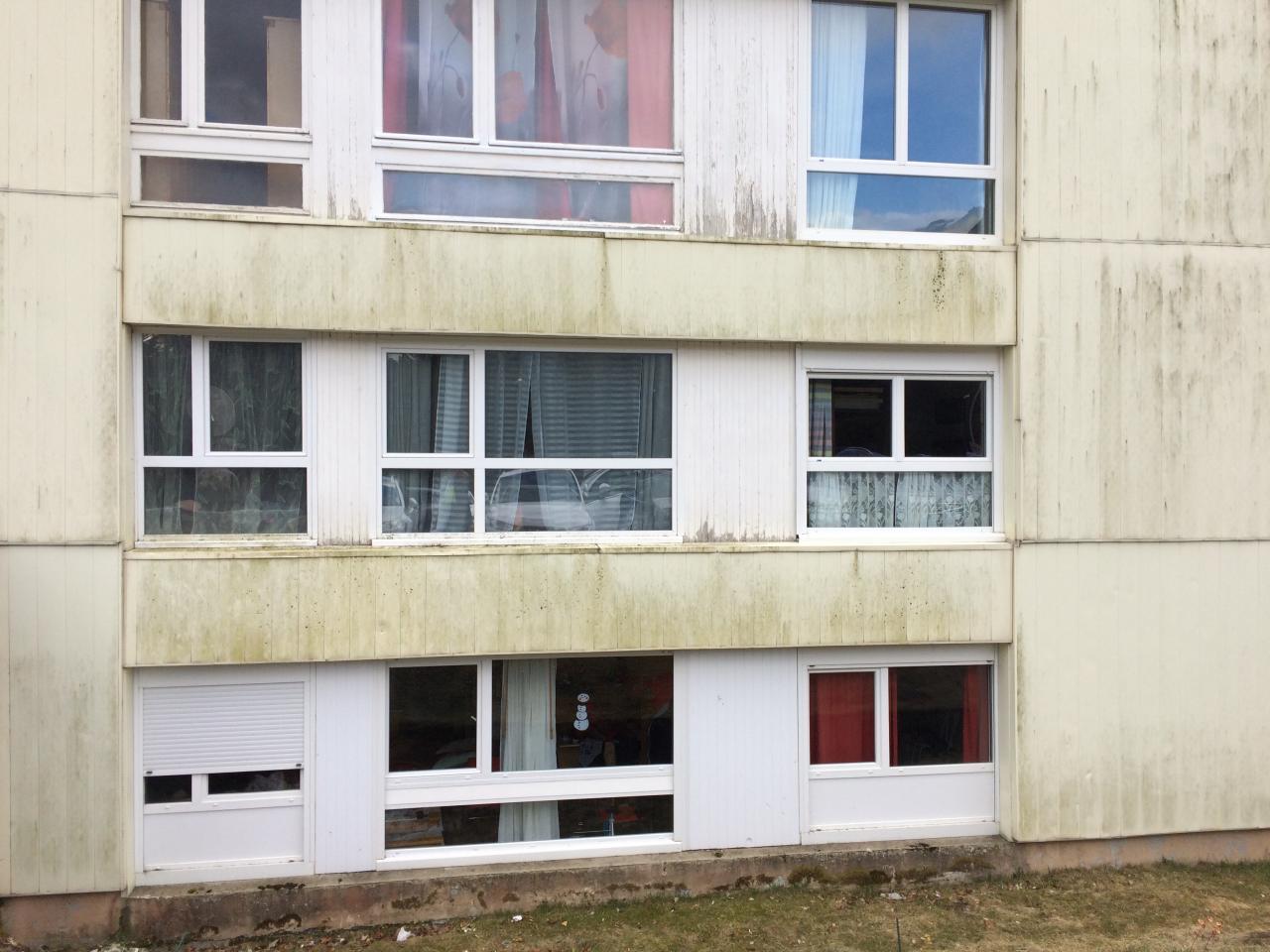 mousse sur façade nord (1)