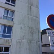 mousse sur façade nord (2)