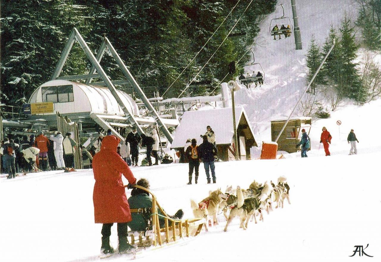 Les chiens de traineau vers 1995