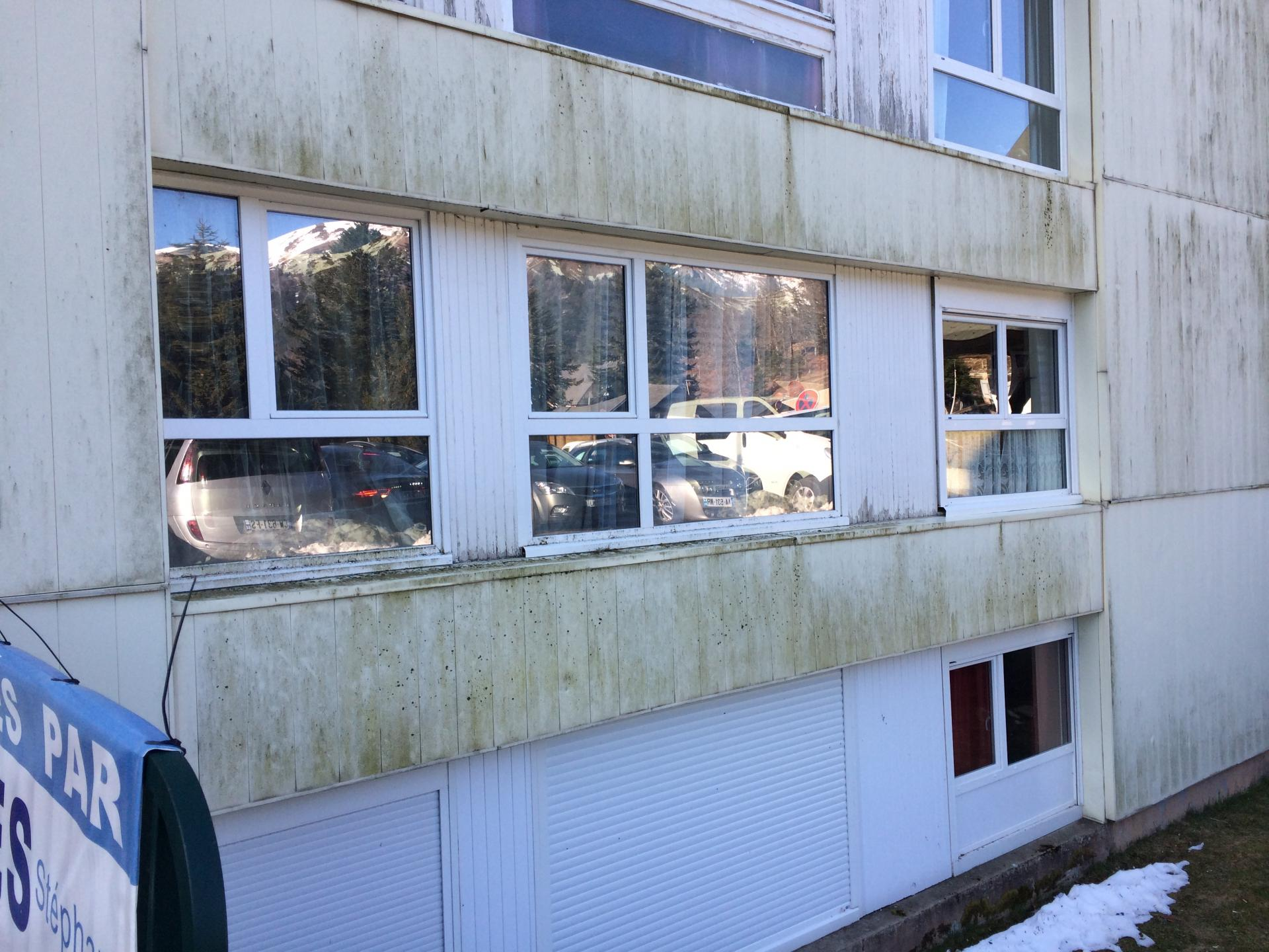 mousse sur façade nord (3)